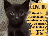 Le grand Oliver