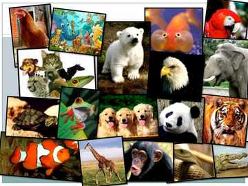 ANIMAL KINGDOM - The animals that make up this kingdom have a great morphological and behavioral diversity, they are