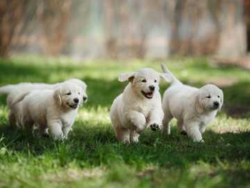 Cachorros - pequeños cachorros lindos