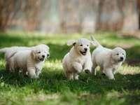 CUCCIOLI - piccoli cuccioli carini
