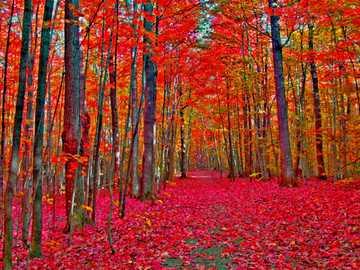 Autumnal landscape - Autumn landscape 2020 =)