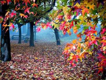 Autumn Landscape - Autumn Landscape =) 2020