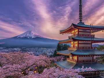 Cherry Blossom -Japan -Mount Fuji - Cherry Blossom -Japan -Mount Fuji