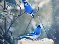 Blauwe vogeltjes