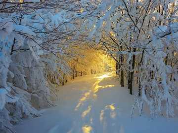 Arbres sans feuilles avec de la neige - Arbres sans feuilles avec de la neige