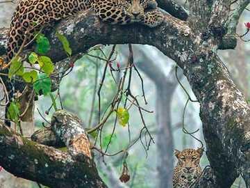 lamparty na drzewie - lamparty na drzewie - bajkowy las
