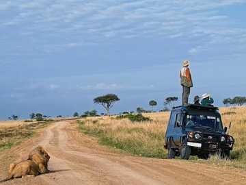 Pronto la hora de comer - El león espera su comida.