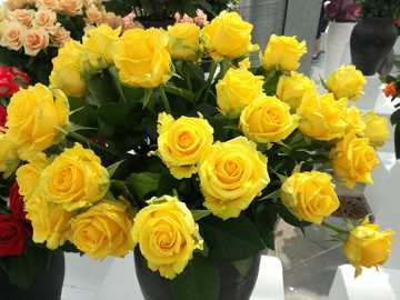 Gelbe Rosen. - Strauß gelber Rosen in einer Vase.