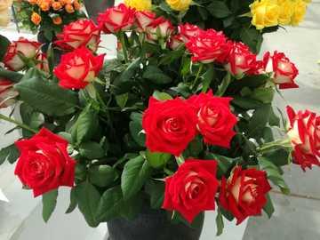 rote Rosen - Strauß roter Rosen in einer Vase.