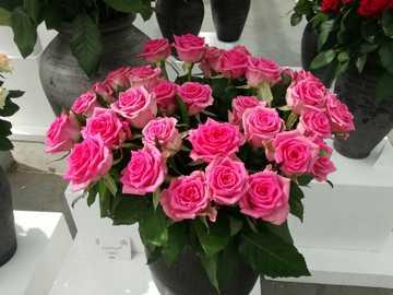 Purpurrote Rosen. - Ein Strauß purpurroter Rosen in einer Vase.
