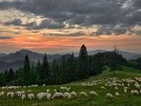 Λιβάδι στα βουνά - ηλιοβασίλεμα - βουνά - πρόβατα