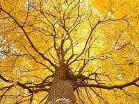 Дърво ...