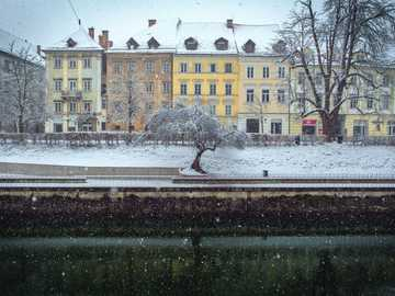 Liubliana bajo la nieve - Árbol cubierto de nieve frente a las casas en tierra de nieve. Liubliana, Eslovenia
