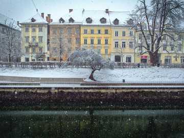 Ljubljana under the snow - snow-capped tree in front of houses on snow land. Ljubljana, Slovenia
