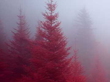 The red forest - Red Forest ................