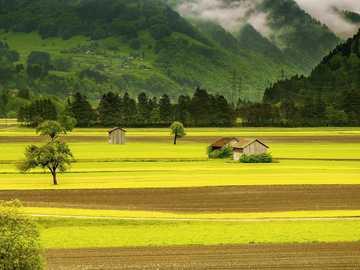 landscape - meadow ----- field ---