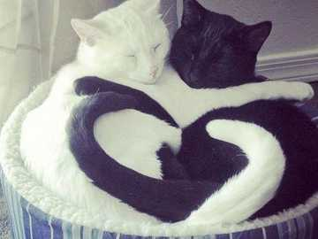 BLACK & WHITE LOVE - A kitten is a juvenile cat. ... After about two weeks, kittens quickly develop and begin to explore