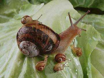 ślimak i jego młode - ślimak i jego młode - gotowe do spożycia