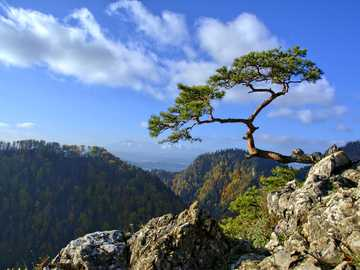 Pieniny Poland - Pine on the rocks ==========