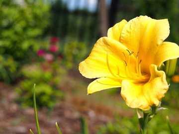 Flower............. - Flower...................