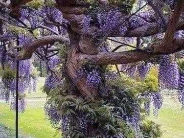 ciekawe drzewo - ciekawe drzewo - fioletowe kolory
