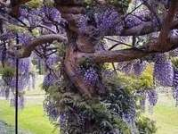 interesting tree - interesting tree - purple colors