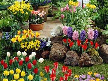 garden flowers - an image with daffodils, tulips
