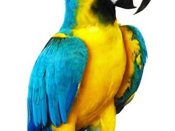 A colorful parrot - parrot in the rainforest