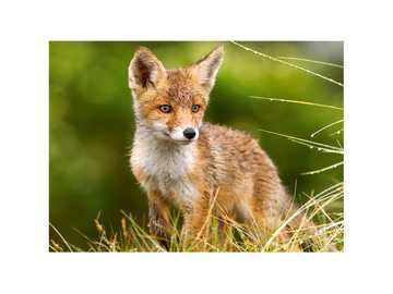 LITTLE FOX IN THE MEADOW - Puzzle animals, little fox among nature