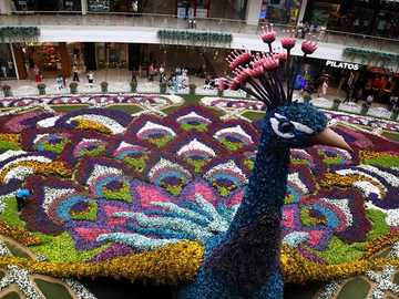 FLORAL PEACKS. - Giant peacock with flowers