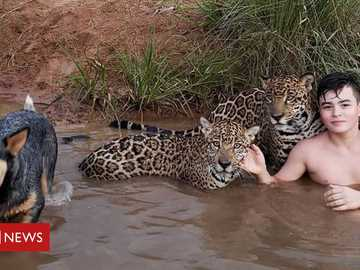 Little jaguar friend - Jaguar friend and his dog