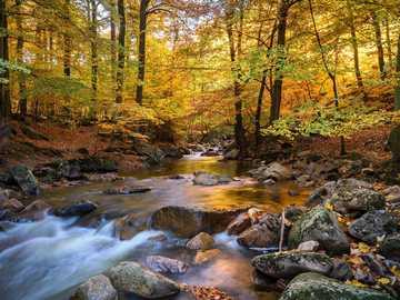 río - bosque - agua - otoño - sol