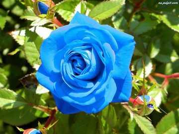 Blume... - Blume.................