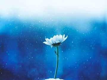 Kwiatek... - Kwiatek...............