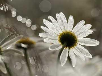Flor... - Flor.............