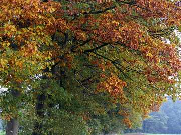 Photo autumn trees - Photo of autumn trees along the way.