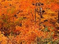 Fotó őszi levelek