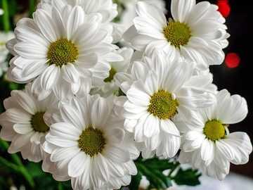 Blume... - Blume...................