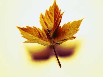 Photo autumn leaf - Photo of an autumn leaf.