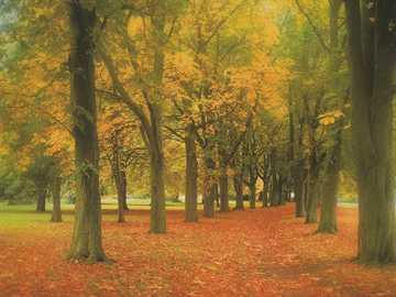 Photo autumn forest - Photo autumn forest mood.