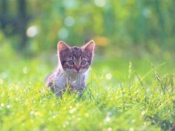 Mały kot na polowaniu - Mały kot polujący na łące.