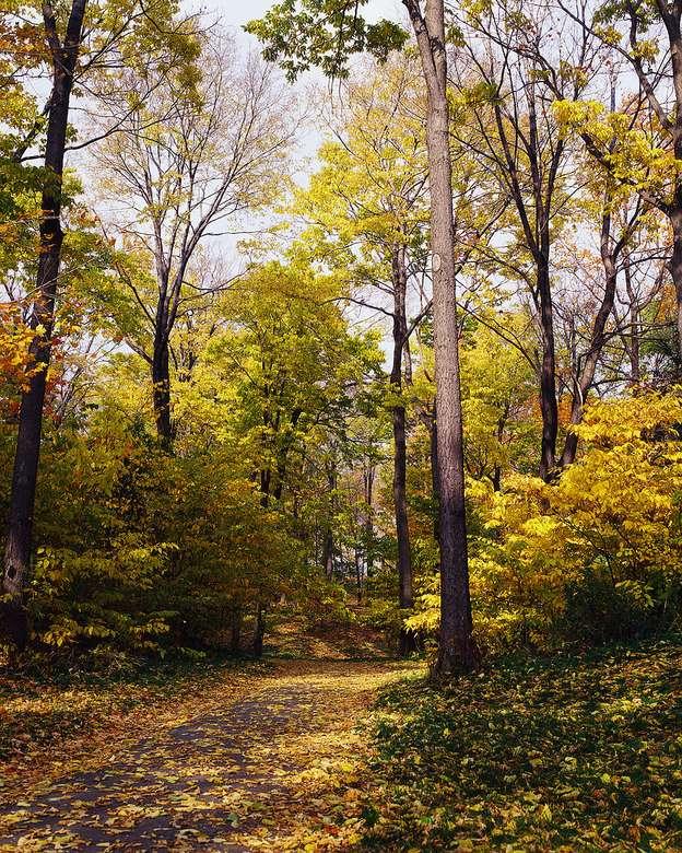 Séta az erdőben - Séta az erdőben ősszel (9×11)