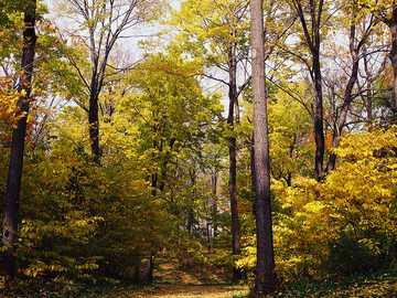 A walk in the forest - A walk in the forest in autumn.