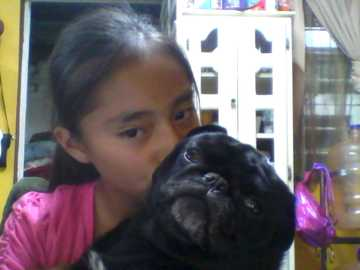 my little dog - my pug my fat my beautiful little dog