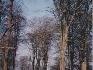 Park w Seven Oaks w hrabstwie Kent - Park w Seven Oaks w hrabstwie Kent