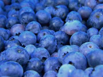 black berries lot - Bundle of Blueberries. Maine, United States