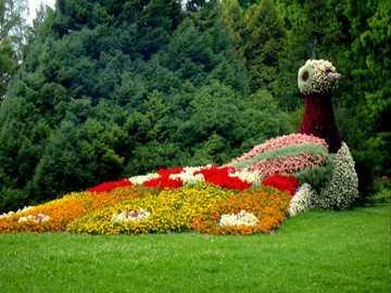 ON THE ISLAND OF FLOWERS - Beautiful places - Lake Constance, Mainau Flower Island
