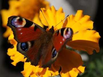 Motylki... - Motylki................