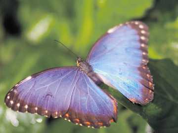 Motylki... - Motylki....................