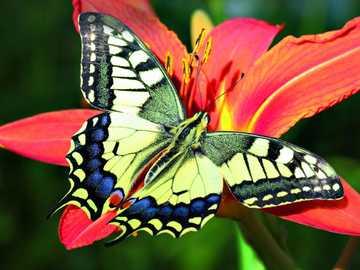 Motylki... - Motylki...................